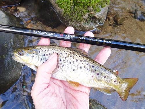 Angler holding small brown trout alongside Suntech Kaname III FP 43