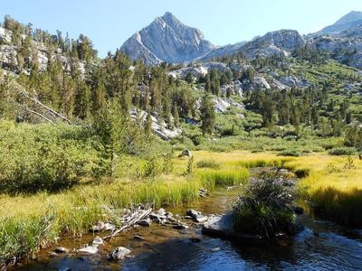 Meadow creek where Goldens grow.