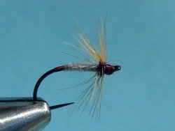The fly used in CO