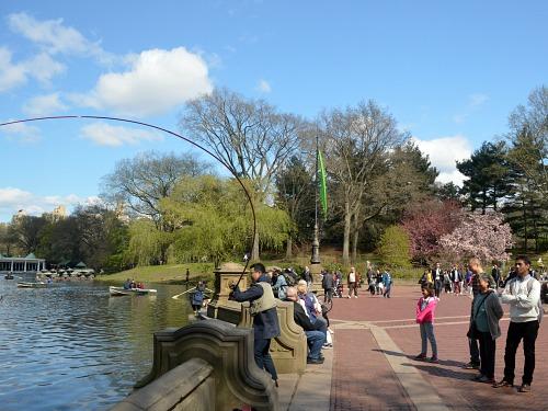 Angler fighting carp in Central Park