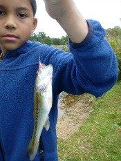 largemouth bass - big m