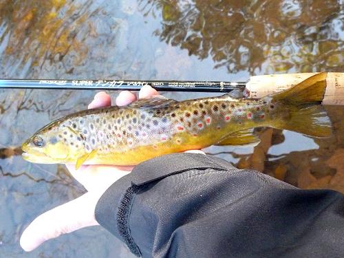 Angler holding brown trout alongside Nissin Pro Square Level Line rod