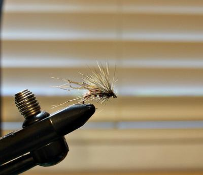 Scruffy fly in vise