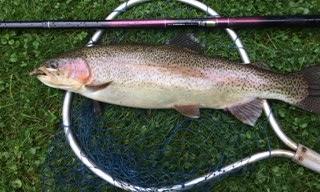 Large trout caught with Daiwa Kiyose 43M