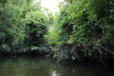 Typical Rio Grande Perch Cover on Cibolo Creek