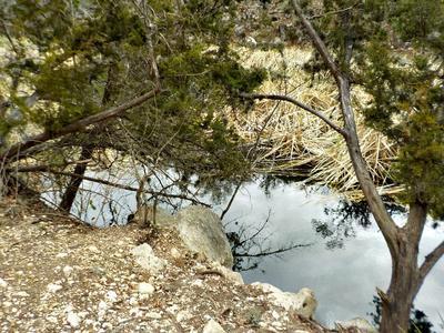 This Brushy, Weedy Spot Yielded a Dozen Plump Bluegills