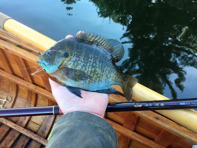 First Sawanobori fish.