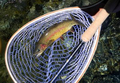 Nature's Palette Coloured Rainbow Trout