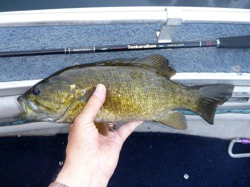 Angler holding smallmouth bass alongside TenkaraBum 36