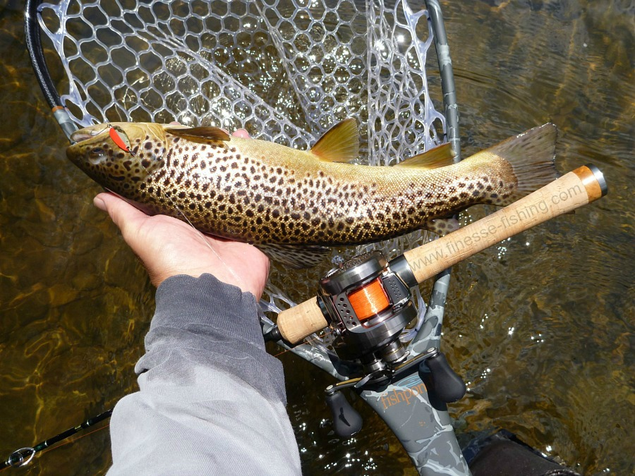 Large brown trout caught with baitcaster.