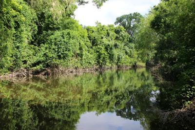 A Beautiful Stretch of Water on Cibolo Creek