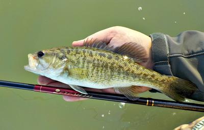Guadalupe bass, Nissin Zerosum 360, and the Blanco River