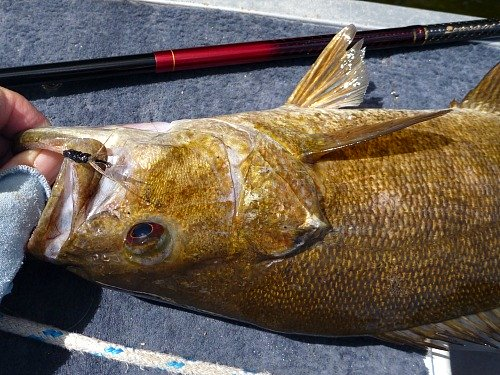 Nissin Zerosum and a smallmouth bass caught with a Keeper Kebari